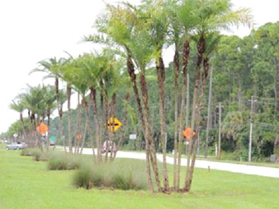 SR400/Beville Road Median Landscape Improvements, Daytona Beach, FL